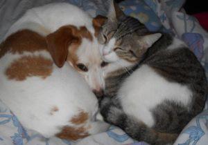 Nuami Dinescu sau ce înseamnă să fii OM Animalele lui Nuami