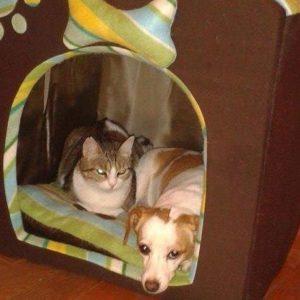 Nuami Dinescu sau ce înseamnă să fii OM Animalute la Nuami