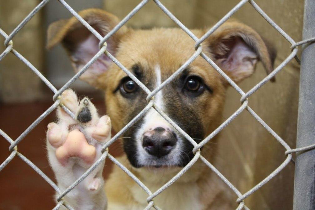 Cum petreci pe 26 august, de Ziua Internațională a Câinelui Caine de adoptat
