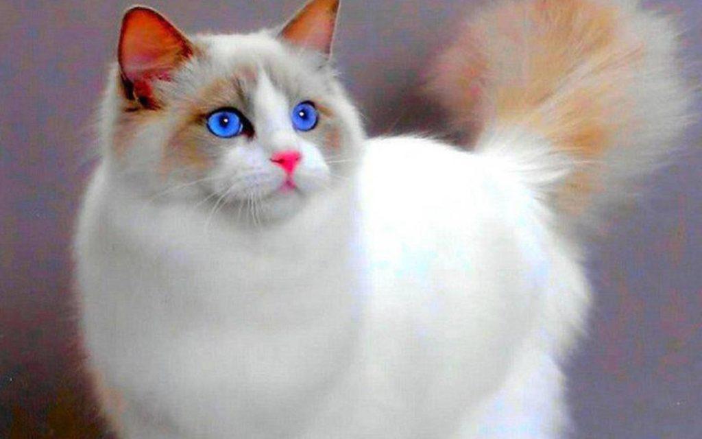 Astăzi este Ziua Internațională a Pisicii Cover pisica