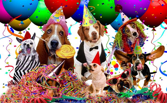 Cum petreci pe 26 august, de Ziua Internațională a Câinelui dog party
