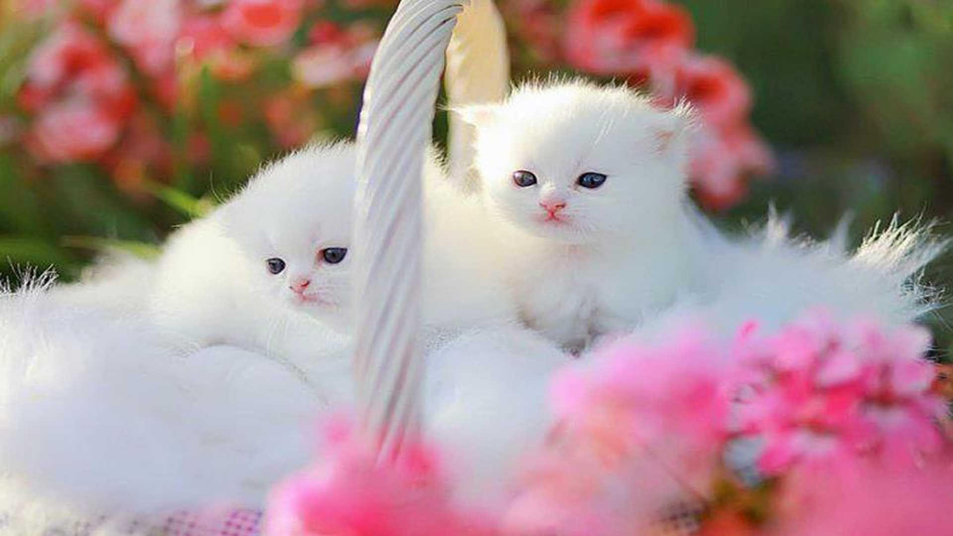 Ziua Internațională a Pisicii - Cum sărbătorim? - Pisica Ta |Ziua Internațională A Pisicii